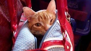 Puss in Purse