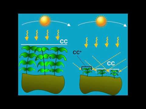 Crop Transpiration AquaCrop - Training Module Nr. 4.4, April 2016