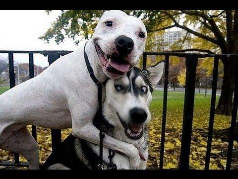 Lustige Hunde Bilder Youtube