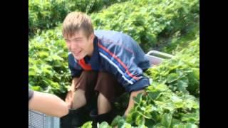 Как собирают клубнику в Финляндии