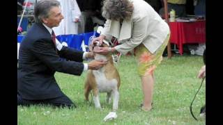 Bull Terrier Club Of New England Dog Show