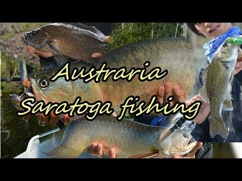 Saratoga fishing trip 2018 オーストラリアで古代魚サラトガを追う【総集編】image video