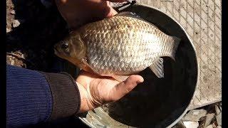 Рыбалка | Это Карась монстр, ловим в пруду возле Питера