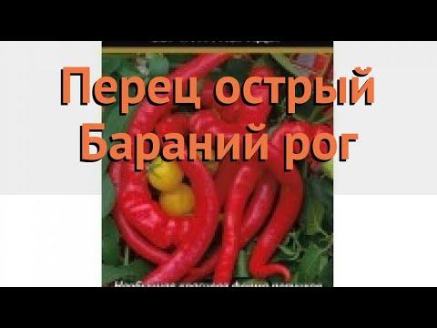 Перец острый Бараний рог (baraniy rog baraniy rog) 🌿 обзор: как сажать, семена перца Бараний рог