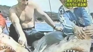 絶滅危惧種 ホホジロザメを守る男