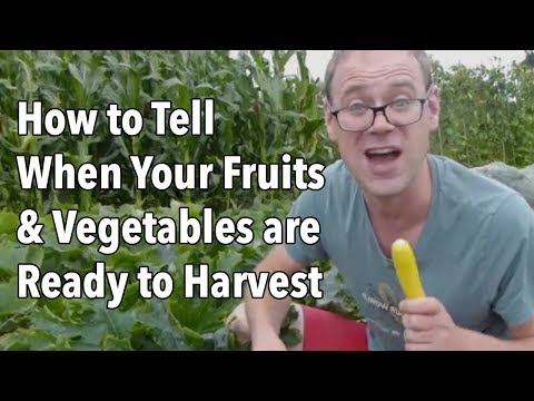 How to Tell When Your Fruits and Vegetables are Ready to Harvest