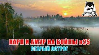 Тест крупных бойлов на карпа и амура Русская Рыбалка 4