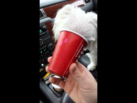 Blake And His Puppy Latte From Starbucks.