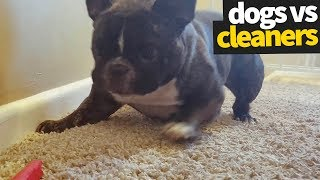 Dogs vs Vacuum Cleaners Compilation | The Ultimate Showdown