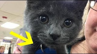 Woman Adopting Kitten Can't Stop Crying After Reading The Words On His Tag thumbnail