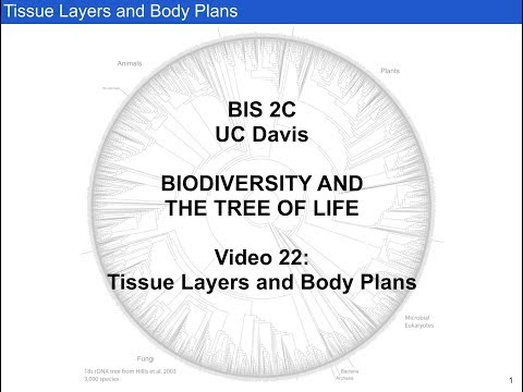 Tissue Layers and Body Plans