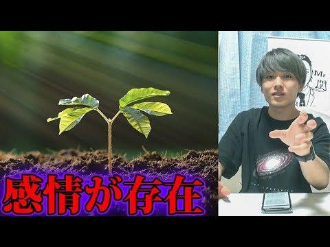 植物に感情や知性があることが発見される【都市伝説】
