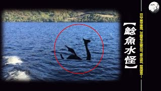 四川特大暴雨水庫暴漲,20米鱷背蛇身水怪竄天而出!專家火速前往,卻發現這竟是……