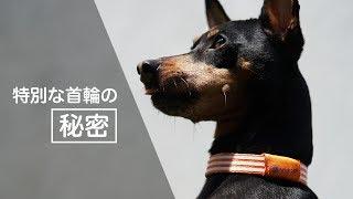 アニマルバランスバンド 公式 Web Site https://arts-pm.com/animal/