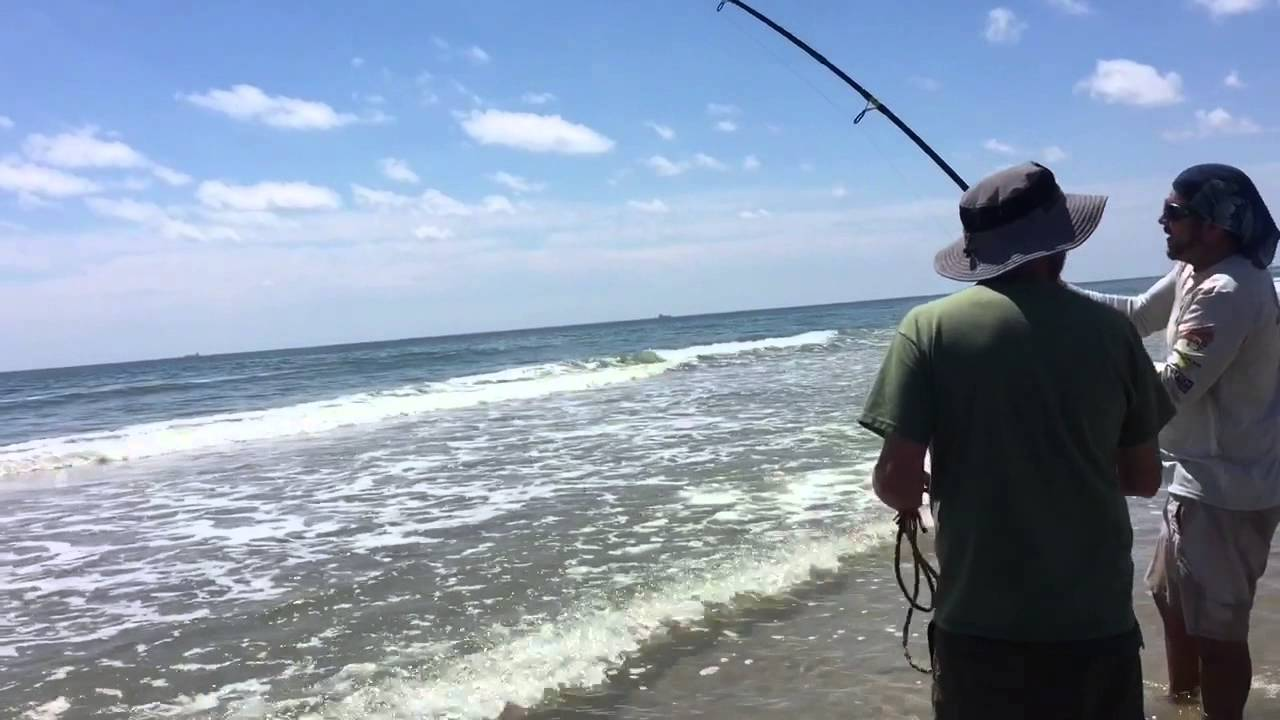 2015 shark fishing south padre island youtube