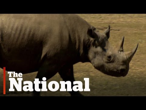 Protecting rhinos in South Africa