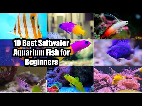 10 Best Saltwater Aquarium Fish For Beginners