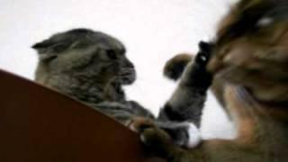 ケンカをしかけるちまりと応戦するえるる。おにいちゃん・・・頭のハゲ...