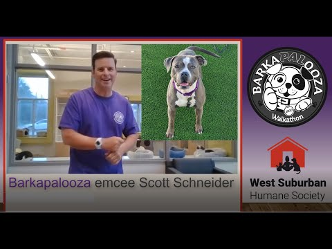 Virtual Barkapalooza 2020 - Update from emcee Scott Schneider, then how to enrich your cat's life!