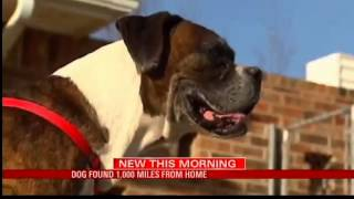 Dog Found 1,000 Miles From Home