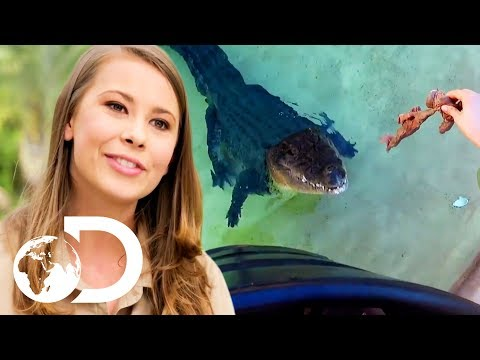 Bindi Irwin Is Living The Dream At Australia Zoo! | Crikey! It's The Irwins