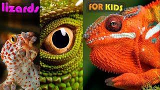 ЯЩЕРИЦА ЕСТ свою КОЖУ СМЕШНЫЕ КРАСИВЫЕ ЯЩЕРИЦЫ в ХОРОШЕМ КАЧЕСТВЕ голос звук крик ящерицы для детей