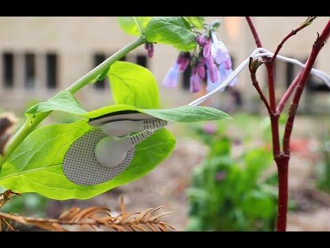 What Do Plants Sound Like? Plants and the Audible Spectrum