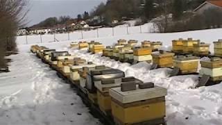 Контроль зимовки пчел в феврале теплый занос. Дешёвая крыша улья