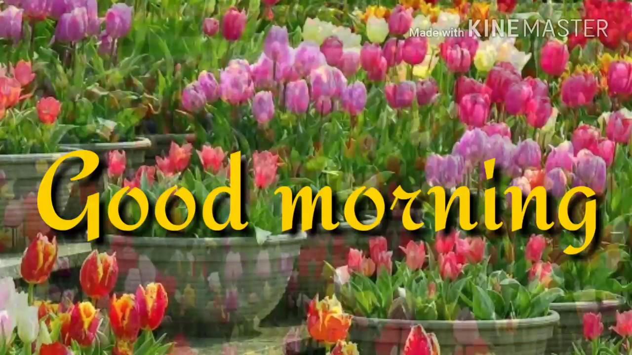 Good Morning Beautiful Video 2017 India Youtube
