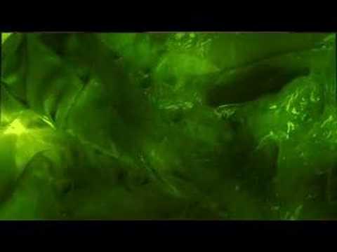 Trailer do filme Devoradores
