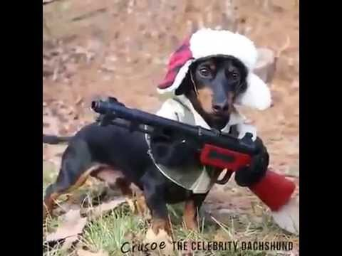 Funny Pics Of Dogs With Guns Perrito disfrazado de ...