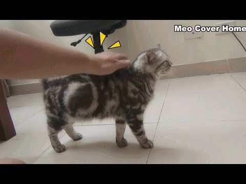 My Cat Follow Me Anywhere So Funny | Funny Cat Vines 2018 | Meo Cover Home