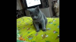 как у нас живёт кот