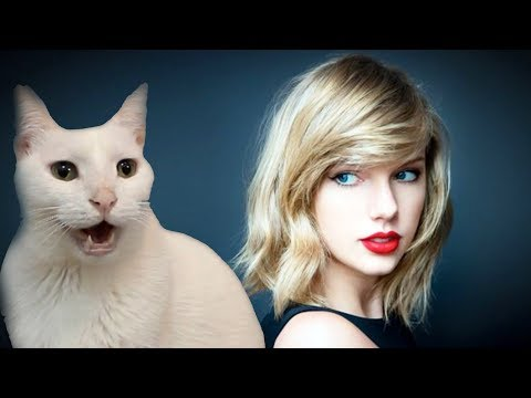 Taylor Swift - Blank Space - Cats Cover