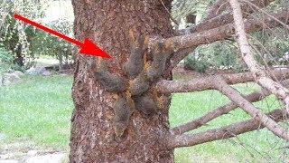 Странное существо сидело на дереве! Оно дёргалось из стороны в сторону и не двигалось с места…