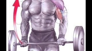 פיתוח כוח וחיזוק הגוף בשיטת Diet2All