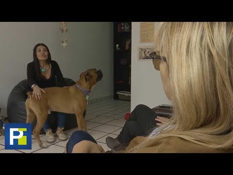 ¿Se imagina que su perro le revelara una infidelidad de su pareja?