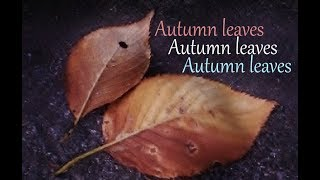 Autumn Leaves - Erhu Instrumental 枯葉 / 二胡 翠月淳