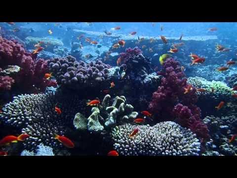 """Garden Island """"Taveuni"""" in Fiji"""