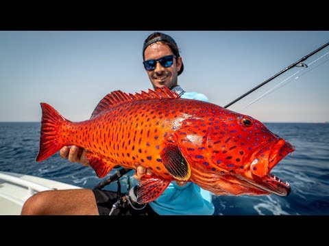 Could This Be The $85,000 FISH?