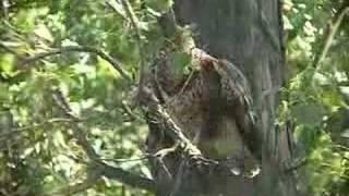 vogelwelt am neussiedlersee