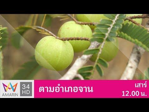 มะขามป้อม จ.กาญจนบุรี | ตามอำเภอจาน | 9 ธ.ค. 60 (1/3)