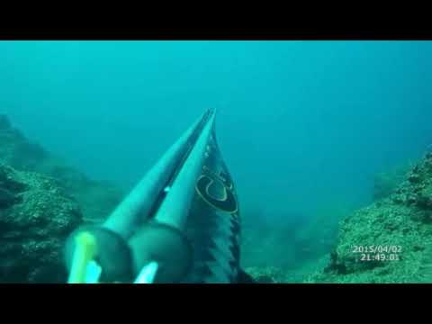 C4 iron spearfishing amberjack dusky grouper By Selçuk Can Polat