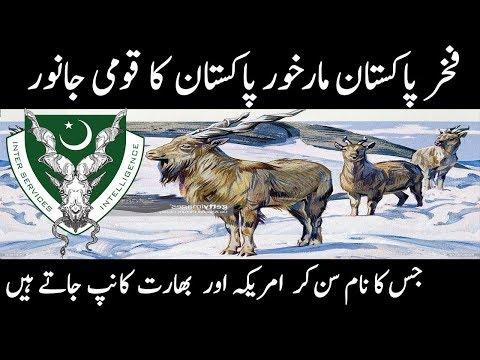National animal of pakistan markhor    symbol of pakistan intelligence agency isi    urdu discovery