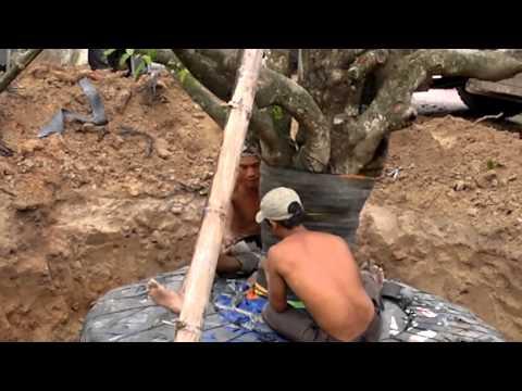 Cây mai khủng độc nhất vô nhị tại Việt Nam