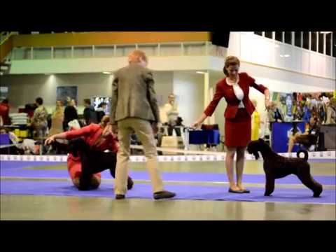Kerry Blue Terrier Show, National Championship 2016_part 2 (juniors)