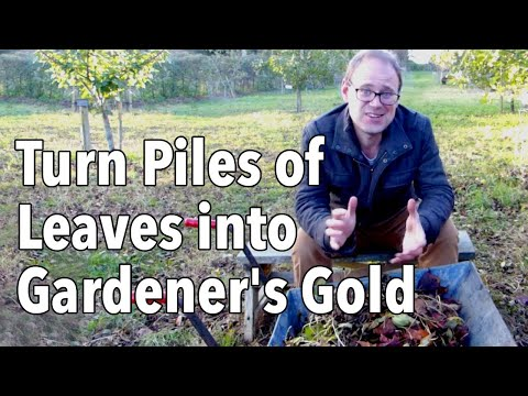How to Make Leaf Mold: Turn Fallen leaves into gardener's gold