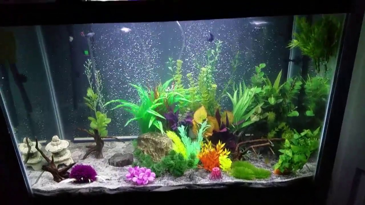 65 gallon aqueon fish tank setup - YouTubeFresh Water Aquarium Gold Fish Images
