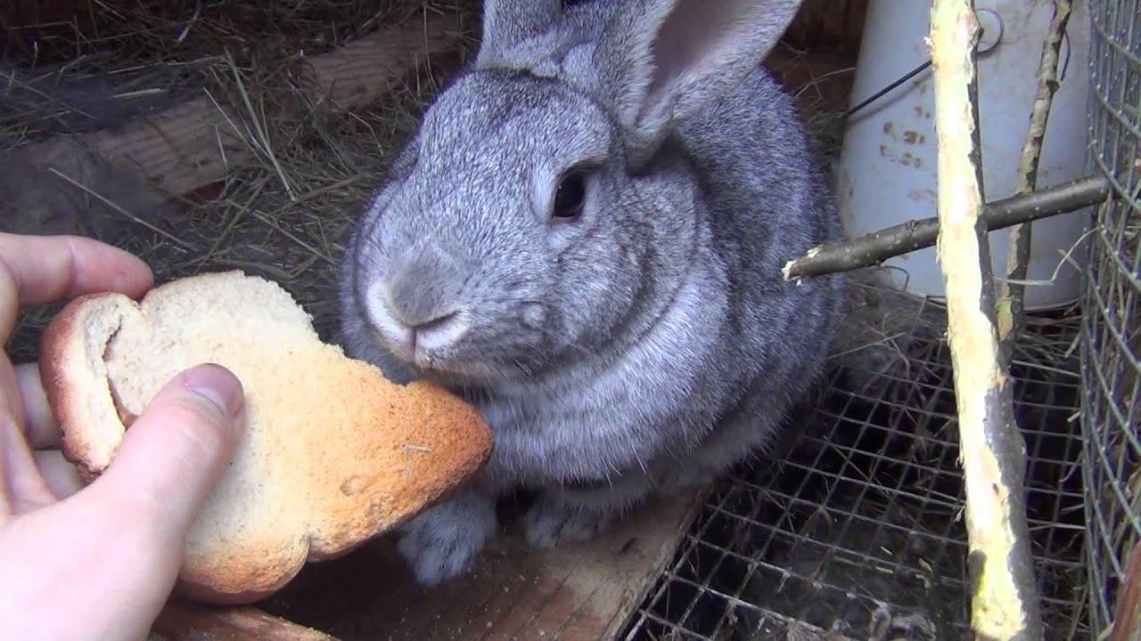Почему нельзя есть зайцев