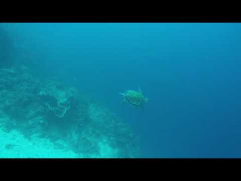 Freediving with magestic turtle in Camiguin island - Philippines